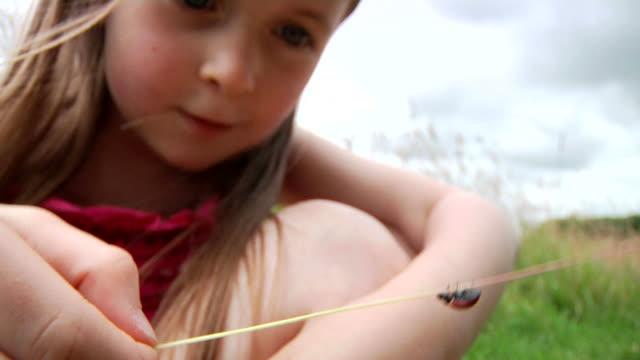 kleines mädchen mit marienkäfer - käfer stock-videos und b-roll-filmmaterial