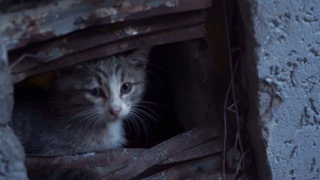 vídeos de stock e filmes b-roll de little grey stray kitten sitting on the ground at night street market. - lata comida gato