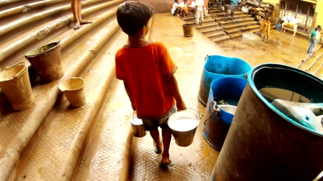 little indian boy carries two buckets with milk Manikarnika Ghat cows people around Children of Benares  Two indian boys swim and splash up in dirty brown water of flooded holy river Ganges poor  district of Varanasi Manikarnika Ghat developing countries stock videos & royalty-free footage