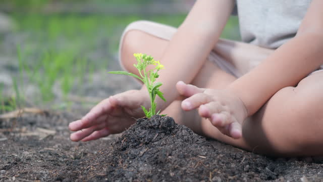 Little kid hand planting seedlings growing a tree in soil on the garden Little kid hand planting seedlings growing tree in soil on garden. Child plant young tree by hand for growth in the morning. Forestry environments ecology Earth Day and New Life concept. slow motion earth day stock videos & royalty-free footage