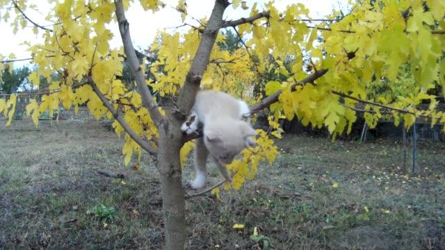 stockvideo's en b-roll-footage met kleine kitten valt uit boom op weide in de natuur - kitten