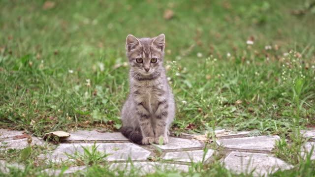 Bидео Little kitten outside
