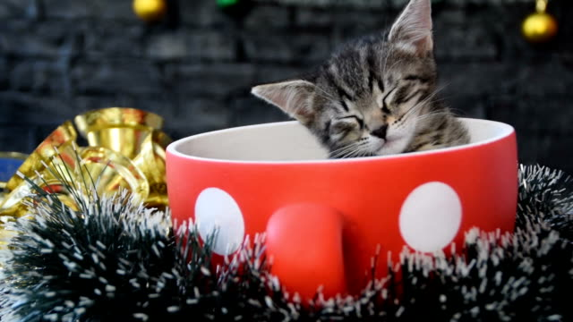 Little kitten sleeps in a big red mug surrounded by Christmas decoration
