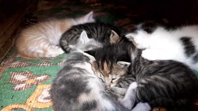 little kittens falling asleep and already sleeping in each other's arms
