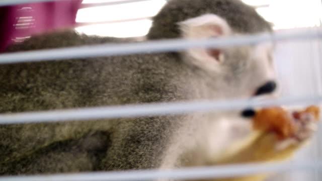 küçük maymun - makak maymunu stok videoları ve detay görüntü çekimi