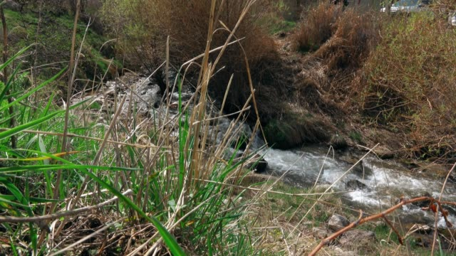 Little Mountain Stream In Early Spring