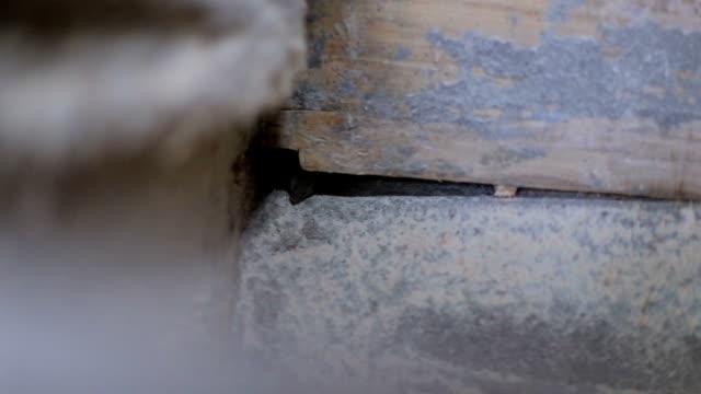 küçük fare mısır unu onun yolunu buldu - kemirgen stok videoları ve detay görüntü çekimi