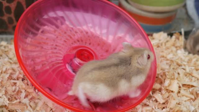 Little mouse running video