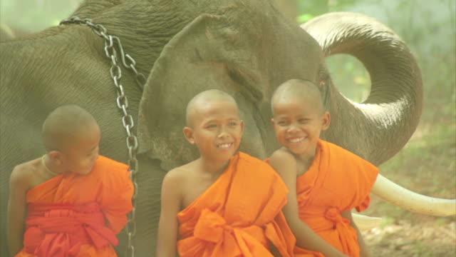 vídeos y material grabado en eventos de stock de pequeños monjes novicios y elefante - hermano