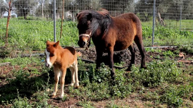 Little pony with his mother video