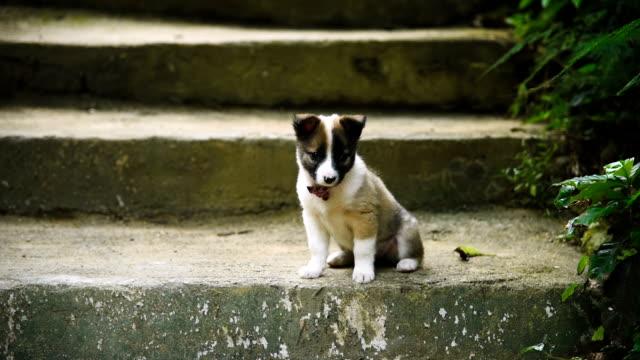 köpek yavrusu - uzun adımlarla yürümek stok videoları ve detay görüntü çekimi