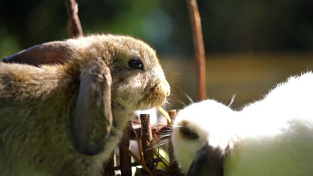Little rabbit in summer day video