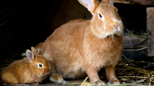 little rabbits family at cage