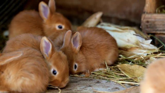 little rabbits family sitting at the cage