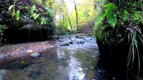vídeos de stock e filmes b-roll de pequeno rio na floresta de outono - castanho
