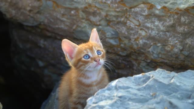 少し恥ずかしがり屋の黄色の子猫 - 子猫点の映像素材/bロール