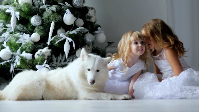 vídeos de stock e filmes b-roll de little sisters tell secrets in christmas eve sitting in white dresses next to dog on background of new year tree - samoiedo