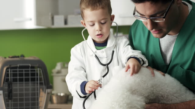ほとんどの獣医と犬 - ビションフリーゼ点の映像素材/bロール