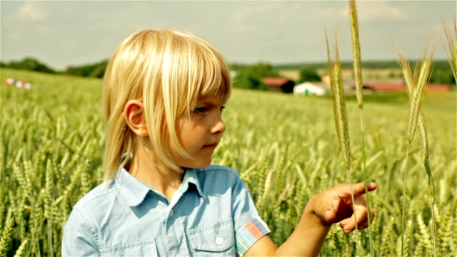 Little Wheat Farmer video