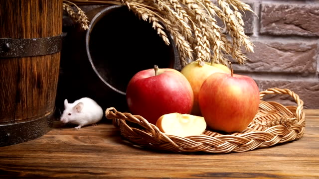 Little white mouse on a rustic background. Little white mouse on a rustic background. pantry stock videos & royalty-free footage