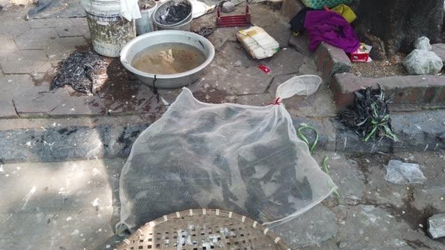 vietnam'da pazarda satmak için canlı kuş - kafes sınırlı alan stok videoları ve detay görüntü çekimi