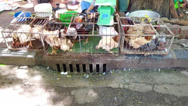 stockvideo's en b-roll-footage met live chicken voor verkoop in de markt in vietnam - chicken bird in box