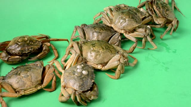 Live crabs on a green background. video