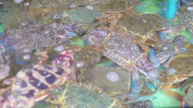 Live crabs video