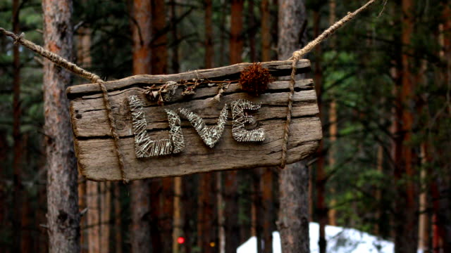 Live marker in the forest video