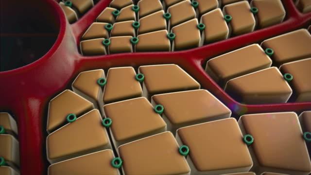 liver cells, virus video
