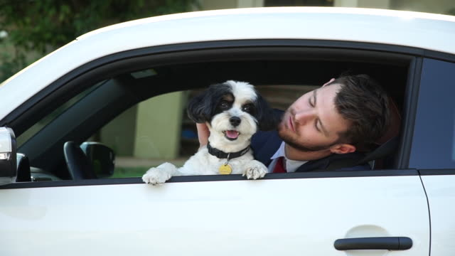 living with pets - businessman driving with his dog - leccare video stock e b–roll