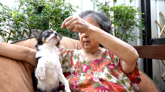 living with pets - nutrire video stock e b–roll