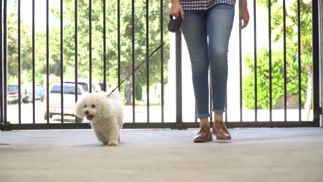 Living with Pets - Walking the Dog Woman walks her dog on a leash. View is only of her legs, feet and her white dog. leash stock videos & royalty-free footage