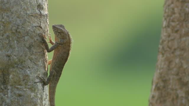 lizard move its foreleg when sun bathing video