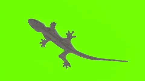 vídeos de stock e filmes b-roll de lizard on green backdrop  background - castanho