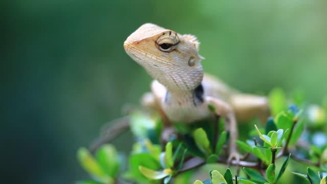 lizard  gecko stock videos & royalty-free footage