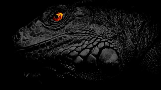 lizard with fiery eyes - gad filmów i materiałów b-roll
