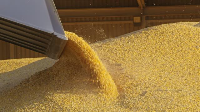 LS Loader excavator moving corn crop Long shot of a loader excavator moving corn crop on a heap. crop plant stock videos & royalty-free footage