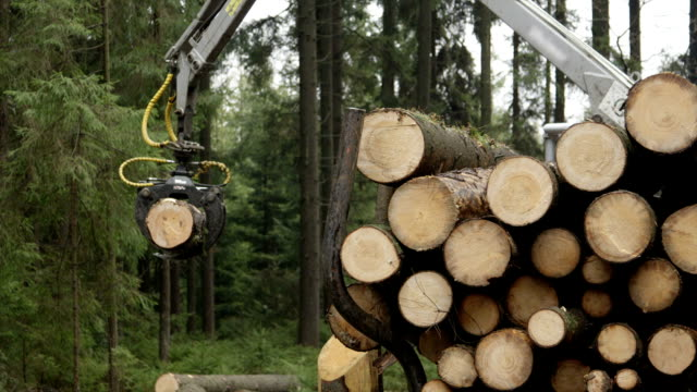 SLOW MOTION: Loader lifting trunk, lowering it on the pile on logging truck video