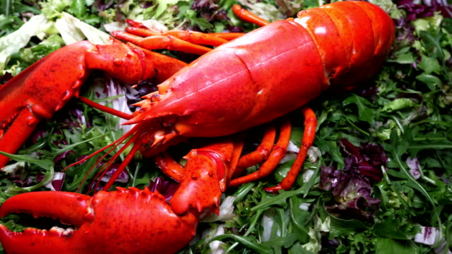 Lobster on salad Lobster on salad, close up boiled stock videos & royalty-free footage
