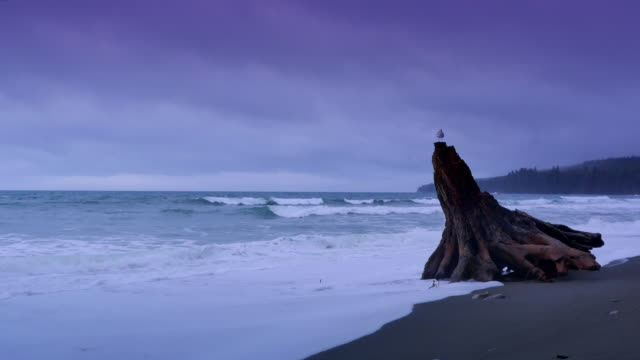 Log Drift Wood on West Coast Beach, Winter Storm Dusk Weather video