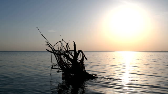 A log in the water at sunset. video