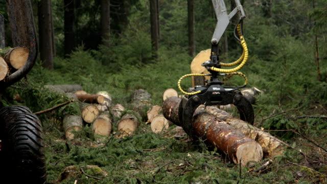 CLOSE UP: Log loader harvesting loading tree trunks and timber on forwarder video