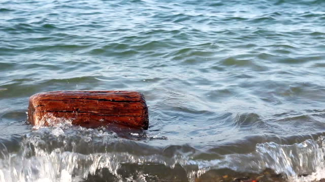 A log of Driftwood floating on the beach video
