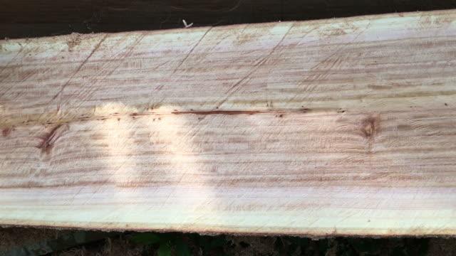 Log wood video