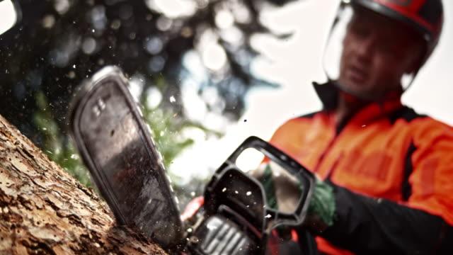 slo mo ld logger bucking a tree with a chainsaw - motosega video stock e b–roll