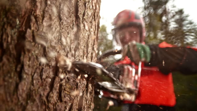 SLO MO LD Logger with a chainsaw cutting into a tree video