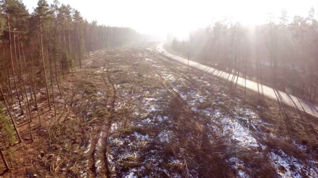 Logging clear cut and highway video