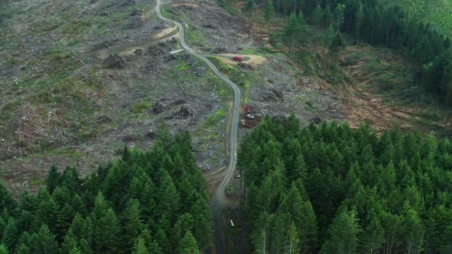 Logging Clear Cut Scar on the Landscape - Birds Eye View