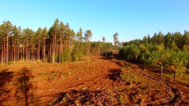 logging clear cut - rana filmów i materiałów b-roll